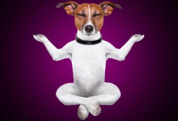 Ce qui arrive à un homme quand il pour la première fois à méditer?