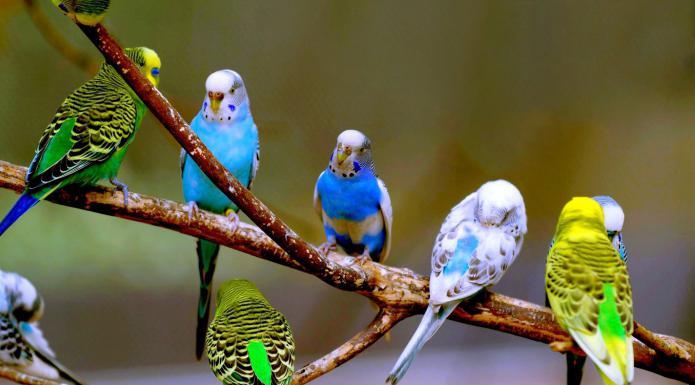 parrot ein heller exotischer vogel wie viele arten von. Black Bedroom Furniture Sets. Home Design Ideas