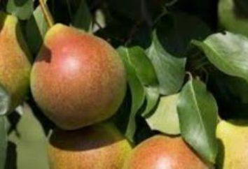 Pear Academic: description, photos, avis et caractéristiques de plantation