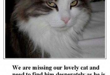 Zagubiony kot! Co zrobić, aby znaleźć kochanie domu?