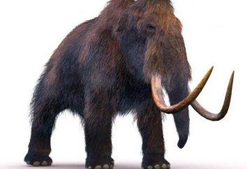 Ogromny mamut: jak rysować i uczyć tego dzieciaka
