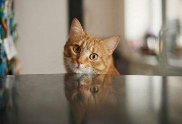 obrzęk płuc u kotów: przyczyny, objawy i leczenie