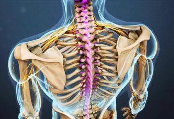 Anatomii kręgosłupa szyjnego, struktury i funkcji