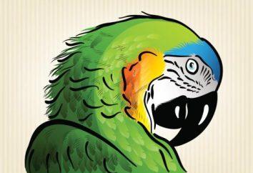 Jak narysować ołówkiem papuga w etapach? Uczymy!