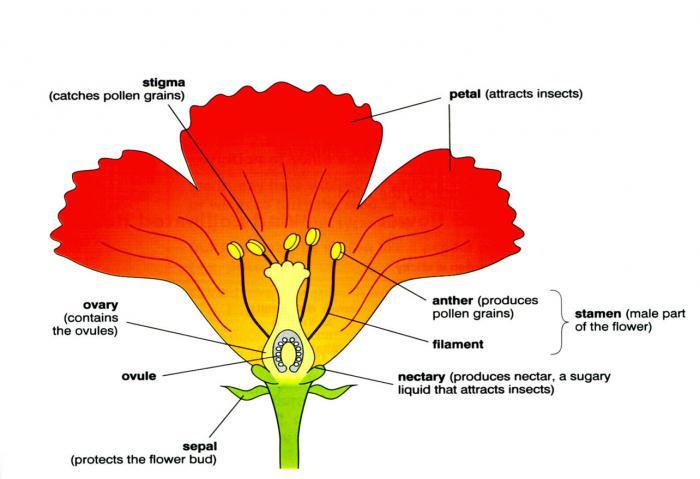 höhere und niedere pflanzen