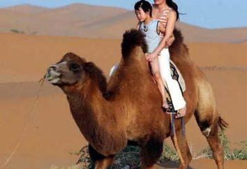 Mongolie intérieure – l'endroit le plus exotique en Chine