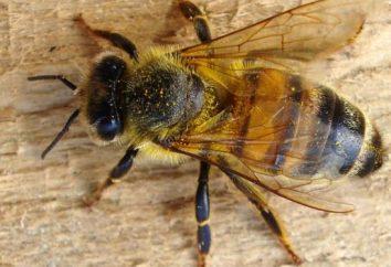 Przygotowanie pszczół na zimę – wielowymiarową Aktywność