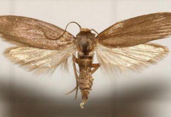 Co dotyczy pszczół ćma? Nalewka: Sposób stosowania