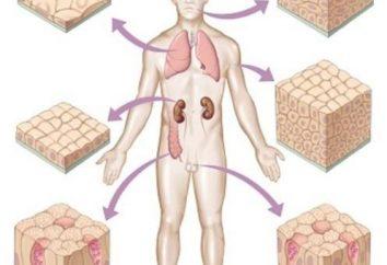 Nabłonek płaski: funkcjonalne i wartość diagnostyczna