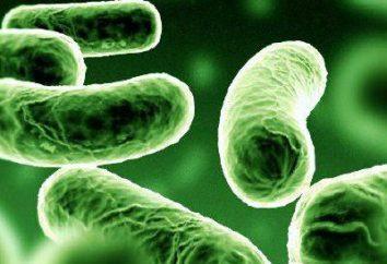 Die Symptome der Tuberkulose in einem frühen Stadium. Tuberkulose in einem frühen Stadium