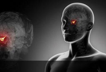 Jakie objawy towarzyszą microadenomas przysadkę? Przyczyny i leczenie chorób