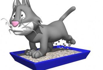 Quelle litière pour chats meilleur choix de trois solutions de rechange