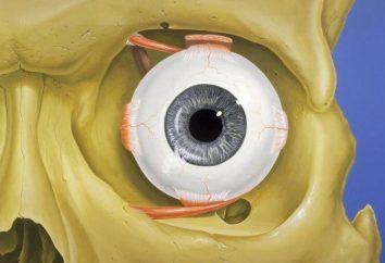 Was ist das Auge? Was bedeutet das Auge in dem menschlichen Körper?
