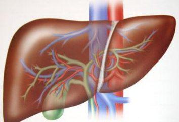 Les raisons et les premiers signes de la cirrhose du foie
