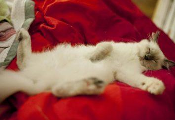 Światowy Dzień kotów – Dzień kota!