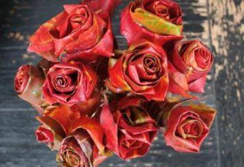 Belle fleur des feuilles d'érable