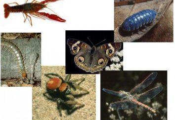 Tipo de artrópodes: características gerais, classificação