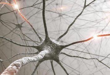 Fizjologia – co to jest? Historia i podstawowe fizjologia