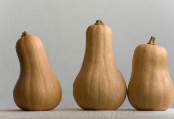Butternut Squash: varietà, proprietà, benefici e rischi. Cosa cucinare da zucca