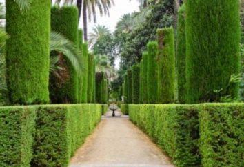 Conifères dans la conception du paysage. Les meilleurs types d'arbres pour votre région