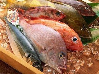 """""""Fábrica de pescado"""" – comprar un producto probado!"""