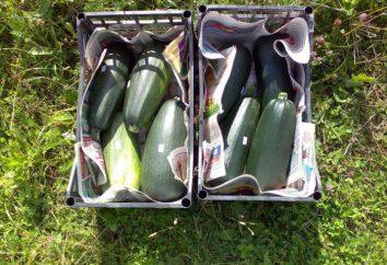 """Zucchini """"tsukesha"""": descrizione della varietà, in particolare la coltivazione e recensioni"""