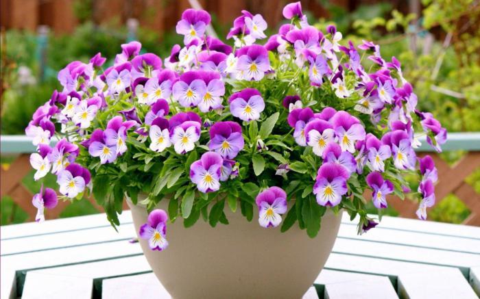 Por qu sueo de flores en macetas Qu significa para verter en un