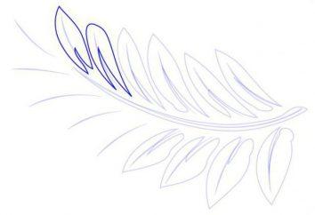 Jak narysować paproci? wskazówki mistrzowskie
