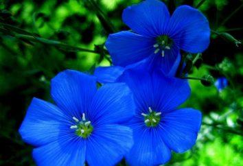 Dekoration eines Hauses – Blaue Blume