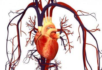 Ostra niewydolność naczyniowo: przyczyny, objawy i zasady pierwszej pomocy