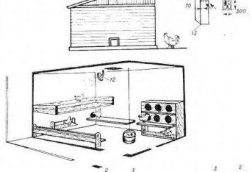 Poulailler avec ses propres mains sur 50 poulets: un dispositif de dessin, équipement