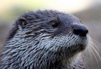 maison Otter: les conditions de détention