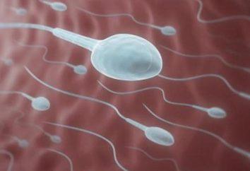 Zwiększona lepkość plemników: przyczyny i leczenia. Normalna lepkość spermy