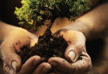 Der Einfluss des Menschen auf das Ökosystem. künstliche Ökosysteme