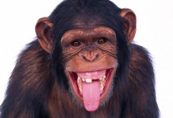 Sen: co marzy o małpie?