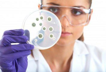 batteri vivi per l'intestino: il nome. Significato dei batteri nella vita umana