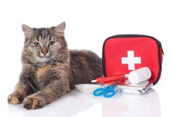 Die Geschichte über eine Katze. Warum Katzen 9 Leben? Stimmt es, dass eine Katze Menschen behandeln? eine lustige Geschichte