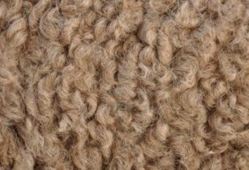 Ce que les propriétés des poils de chameau?