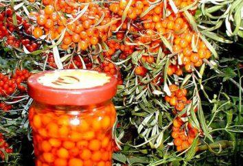 Come piantare bacche di olivello spinoso: guida passo per passo
