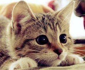 Dlaczego koty łapy bieżnikowania: Specjaliści spotkań