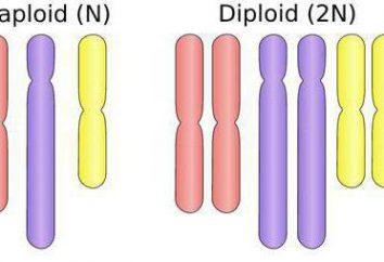 Che cosa è polyploidy? Che ruolo svolge nella selezione e nella natura