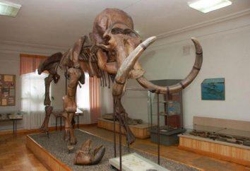 Penza, Museum: Adresse, Öffnungszeiten, Bewertungen und Fotos