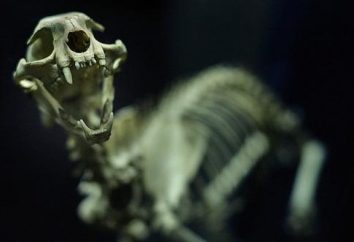 Qual è la struttura dello scheletro di un gatto?