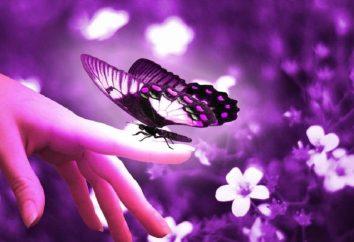 Segno: la farfalla volò in appartamento. È questo evento per la bontà?