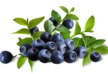 Jardin Blueberry: Plantation et entretien des plantes