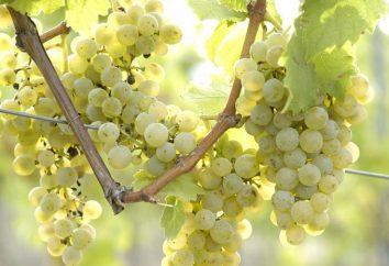 Composição, propriedades úteis e passas de uva de calorias