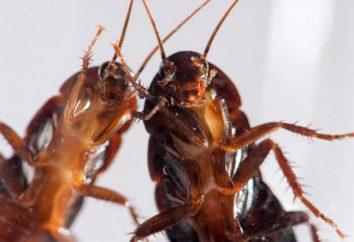 Jak się pozbyć karaluchów w schronisku szybko i trwale?