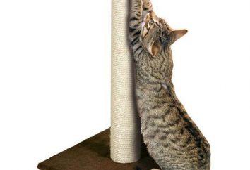 Jak przyzwyczaić kota do drapak: zasad i zaleceń