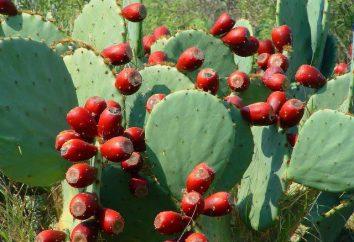 I messicani sono state fatte da polpa di legno di cactus ai vecchi tempi?