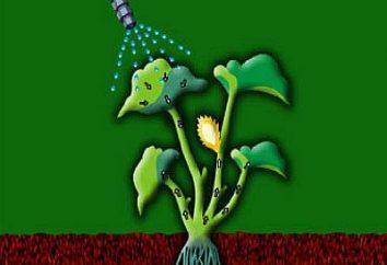 """Forte Hurricane"" – herbicide toutes les mauvaises herbes"